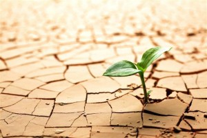 Los agricultores afectados por la sequía favorecidos en la declaración de la Renta de 2012